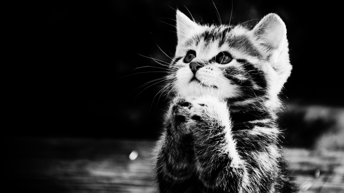Moshlab.com Cat Praying_BW